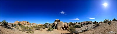 Joshua Tree Kalifornien