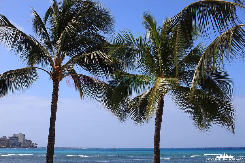 Palmen mit Blick auf das Meer