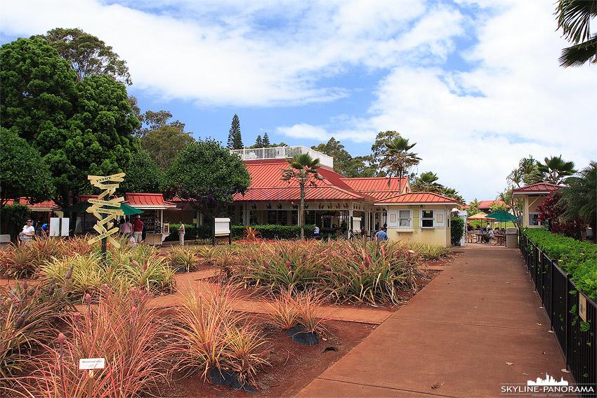 Ananas Farm - Dole Hawaii