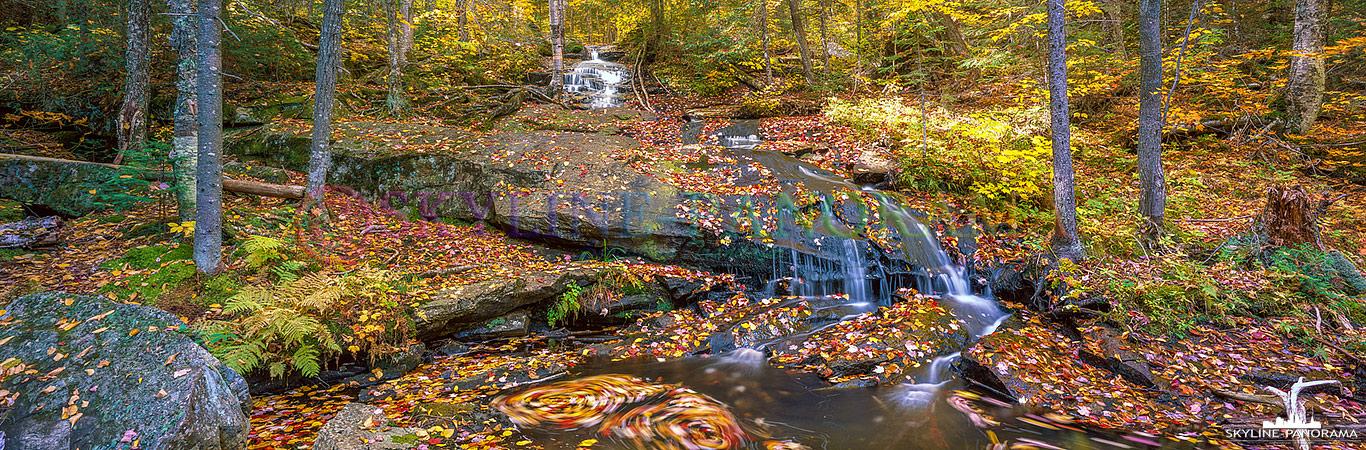 Herbstwald in Kanada