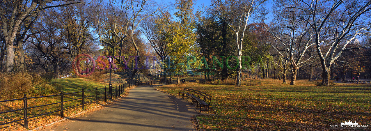 Panorama Central Park - Autumn
