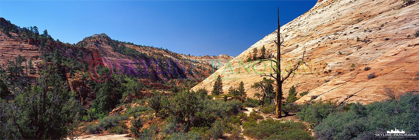Zion Nationalpark - Utah 6x17