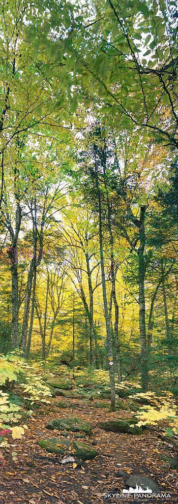 6x17 hochkant Panorama - Dieses Motiv entstand auf einer Wanderung im Herbstwald Kanadas zur Zeit des Indian Summers Oktober 2016.