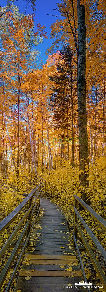 6x17 Ahornwald im Osten der kanadischen Provinz Québec zur Zeit des Indian Summers. Die Laubfärbung ist zu dieser Jahreszeit in Rot und Gelb getaucht.