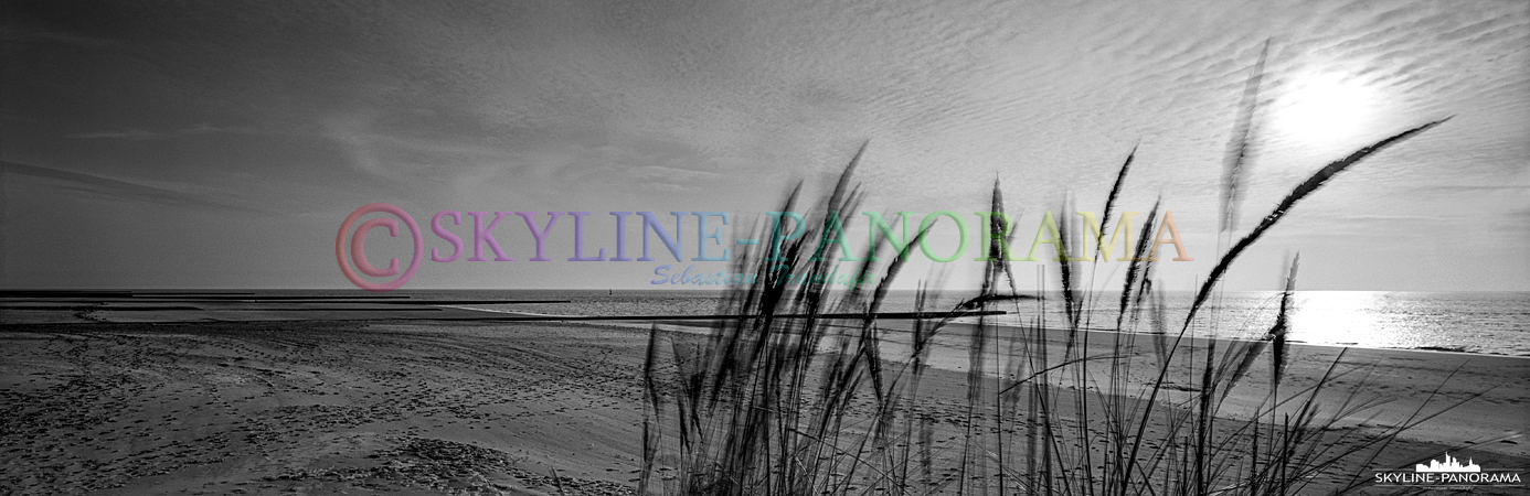 Strand von Borkum - Sich im Wind wogendes Dünengras als monochromes Fine Art Panorama im 6x17 Format.