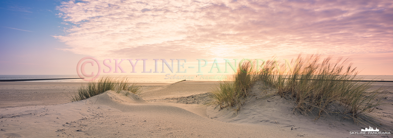 Bilder Borkum - Dünengras im Abendlicht am Südstrand der Nordseeinsel Borkum.