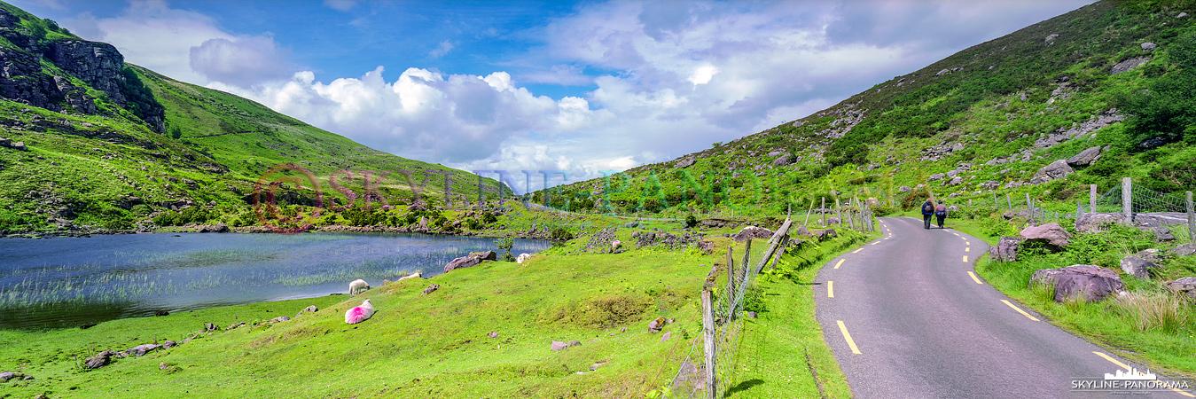 6x17 Panorama - Unterwegs am Gap of Dunloe, als Wanderer durch die Dunloe-Schlucht muss man sich den gut asphaltierten Weg mit ein paar Pferdekutschen teilen.