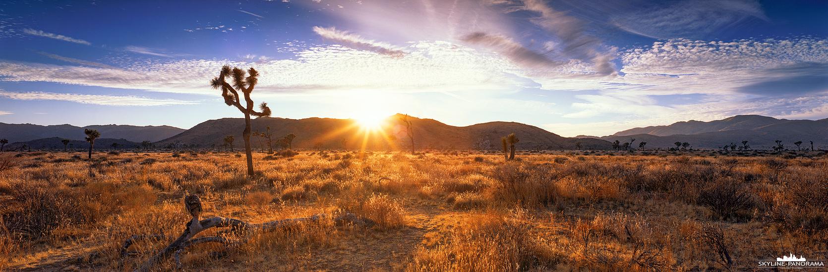 Sunset Panorama - Die Landschaft im Joshua Tree Nationalpark (Kalifornien) wird in diesem 6x17 Panorama in das warme Licht der untergehenden Sonne getaucht.
