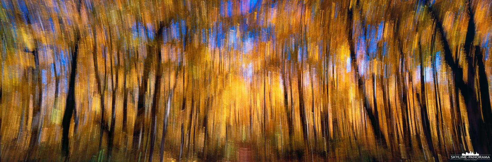 Herbstfarben Panorama - Unterwegs in einem Ahornwald im kanadischen Indian Summer, in diesem Panorama wurden die Herbstfarben etwas abstrakt festgehalten.