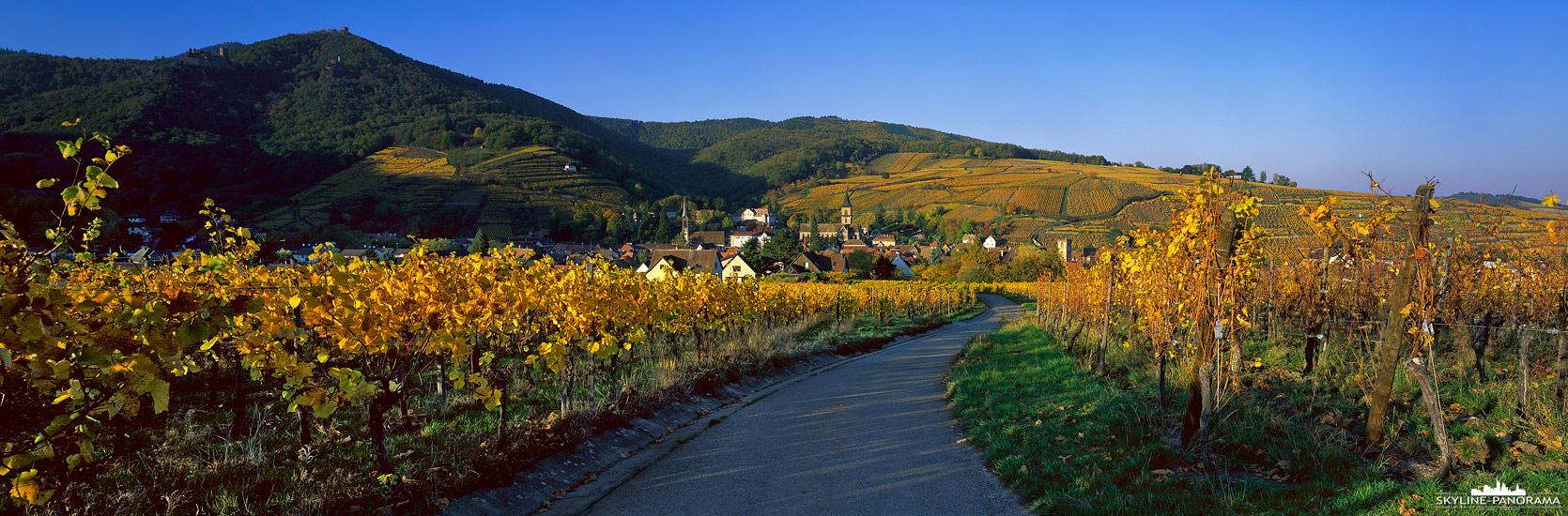 6x17 Panorama Alsace - Unterwegs in den herbstlichen Weinbergen von Ribeauvillé im französischen Elsass. Durch die Stadt Ribeauvillé  verläuft die Elsässer Weinstraße.