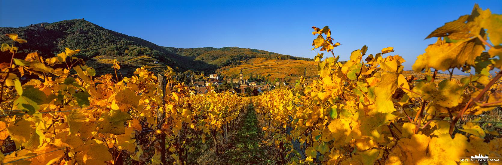 Die Landschaft Rund um Ribeauvillé ist geprägt durch den Weinanbau, in der Region gibt es augenscheinlich kaum einen Hang, an dem sich kein Weinberg befindet. Auf Wanderungen kann man einige von ihnen erkunden und den wunderbaren Blick in den malerischen Ort genießen.