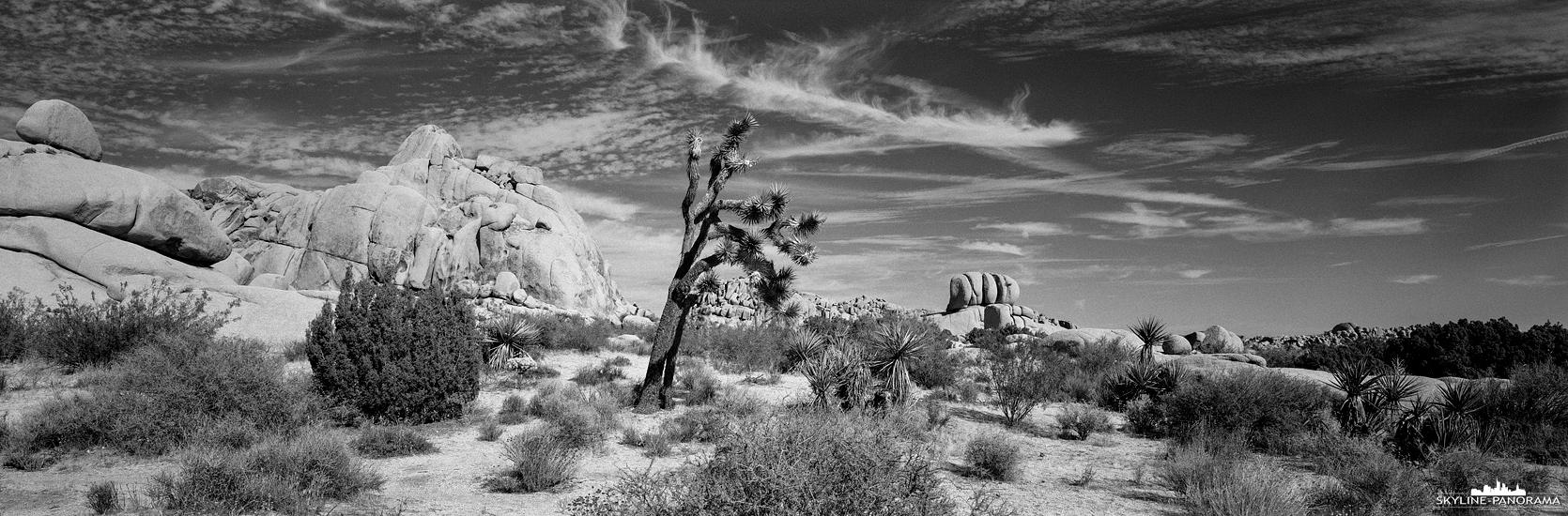 Der Joshua Tree National Park, im Süden des US-Bundesstaates Kalifornien, gehört zu den bekanntesten und zugleich auch zu den sehenswertesten National Parks an der Westküste der Vereinigten Staaten. Auf diesem 6x17 Panorama in schwarzweiß ist ein Teil der Jumbo Rocks mit einem einzelnen Joshua Baum zu sehen.