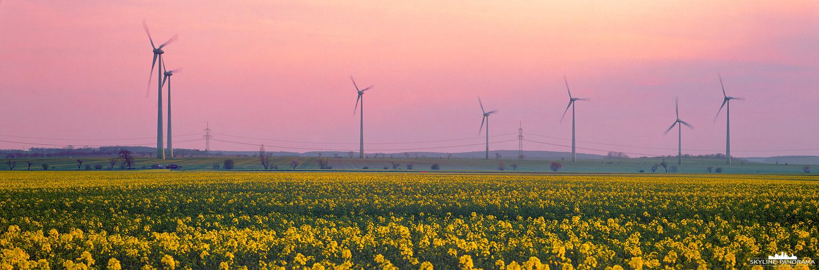 Panorama Energiewende – Zum Thema erneuerbare Energien; ein Rapsfeld mit einigen Windrädern im Harzvorland während des Sonnenuntergangs, im Hintergrund ist eine Hochspannungsleitung zu sehen.