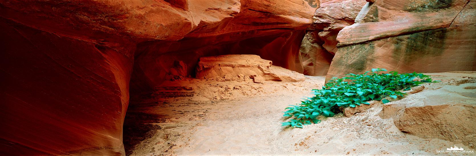 Eine beeindruckende Erfahrung war die Wanderung durch den Slot Canyon des Waterholes Canyon in Page Arizona. Er ist nicht so bekannt wie der nur wenige Kilometer entfernte Antilope Canyon, jedoch weniger überlaufen und dadurch sehr sehenswert. Zu dem Zeitpunkt meines Besuches hatte man die Gelegenheit eine Einzelführung ohne Zeitlimit zu buchen. Sogar etwas Grün konnte man auf der Tour in dem staubigen Wüstenboten des Slot Canyons erblicken. Scheinbar ist es schon einige Zeit her, als die letzten Wassermassen durch den Waterhole Canyon gelaufen sind.